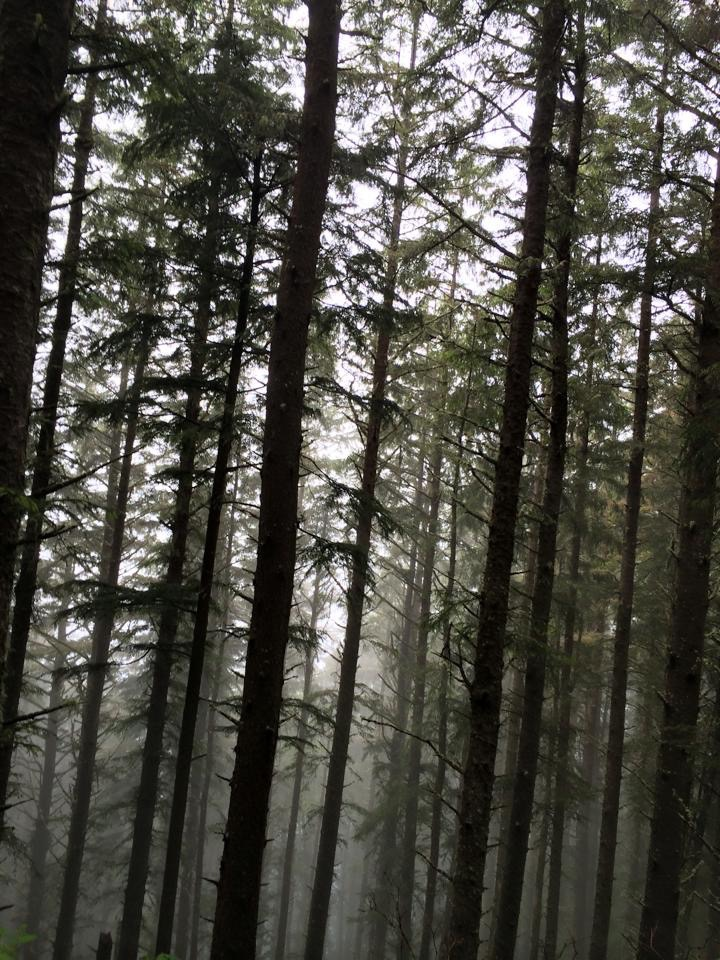 Foggy morning hike at Cape Lookout, Oregon.